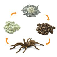 safari-ltd-life-cycle-of-a-spider