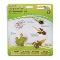 safari-ltd-life-cycle-of-a-frog