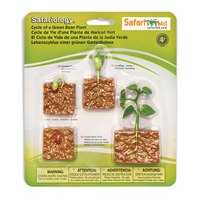 safari-ltd-life-cycle-of-a-green-bean-plant